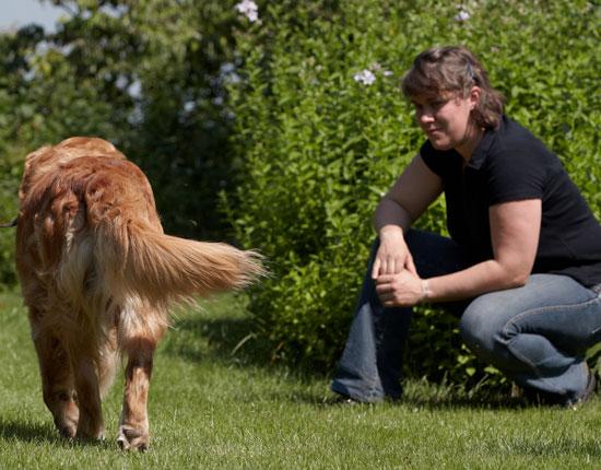 Anna-Steijling-dierfysiotherapeut-hond