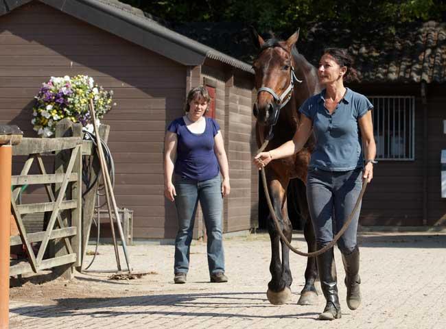 Fysiotherapie-paard-monsteren-bewegingsanalyse-Dierfysio-Steijling