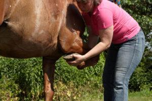 Fysiotherapie-paard---verbeteren-welzijn-en-prestatie