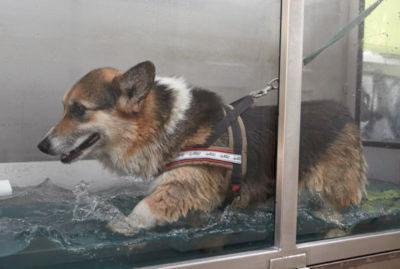 Aquatraining hond
