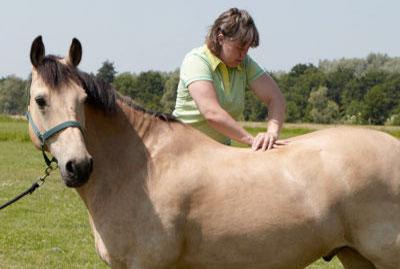 Fysiotherapie-paard